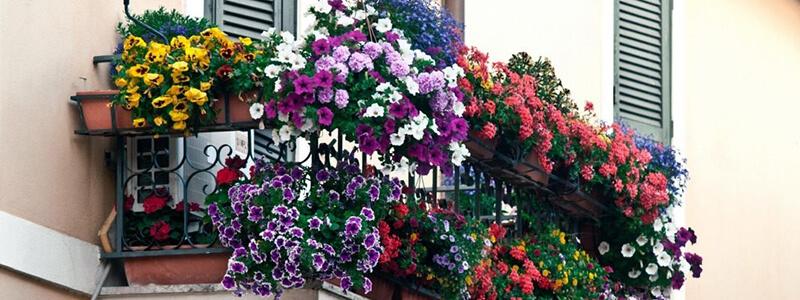 Balkony beautiful flowers small